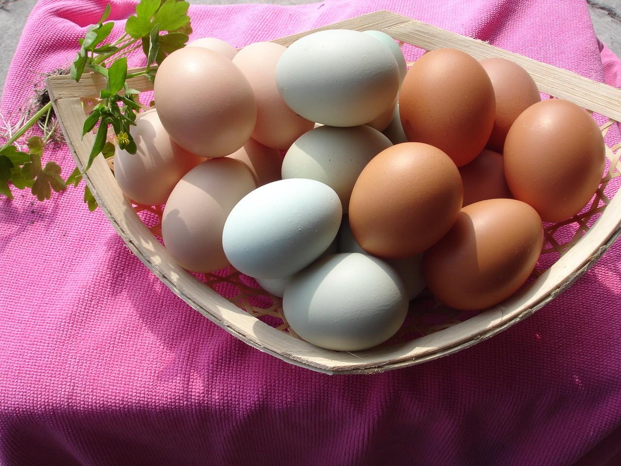 烏骨雞蛋(每盒10顆裝)